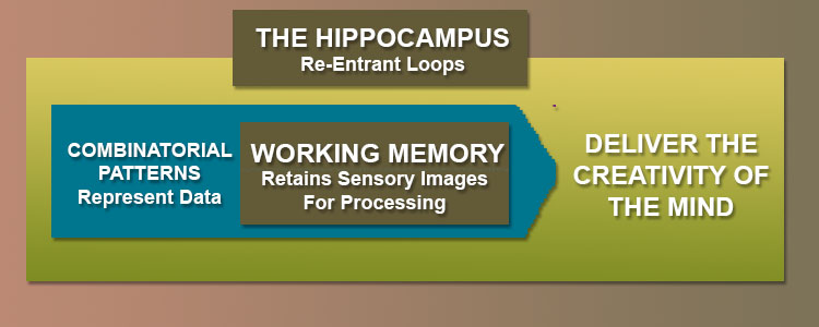 the hippocampus and working memory and Neuroscientists have used light to erase a specific memory in mice, showing how the hippocampus and cortex work together to retrieve memories.