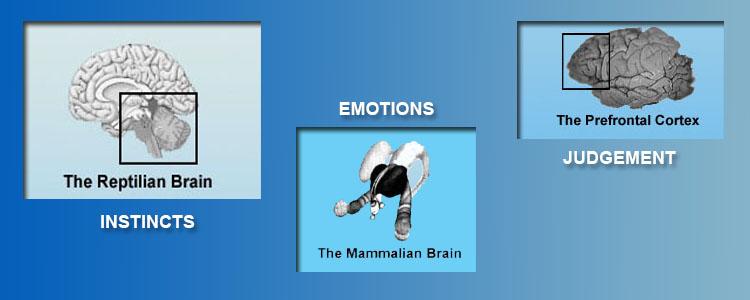 reptilian brain behavior